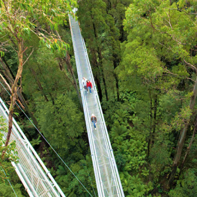 BIG4 Apollo Bay Pisces Otway Fly Treetop Adventure Tours
